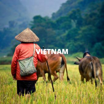 Fixers in Vietnam
